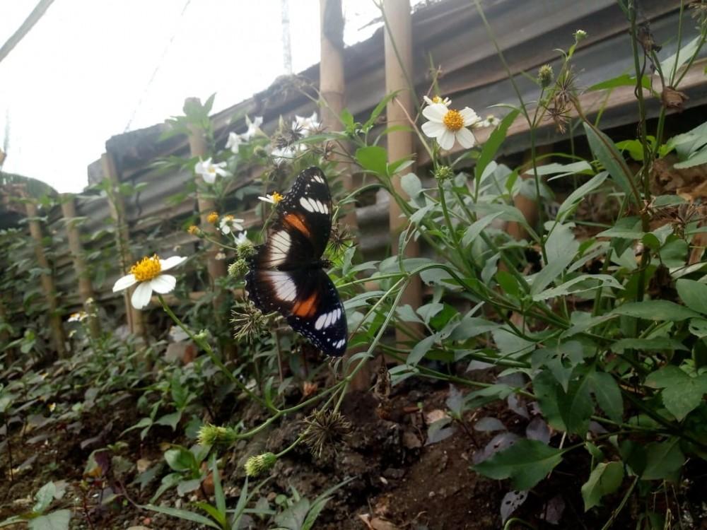 Pasukan Oranye Sulap Kawasan Ini Jadi Taman Kupu-Kupu