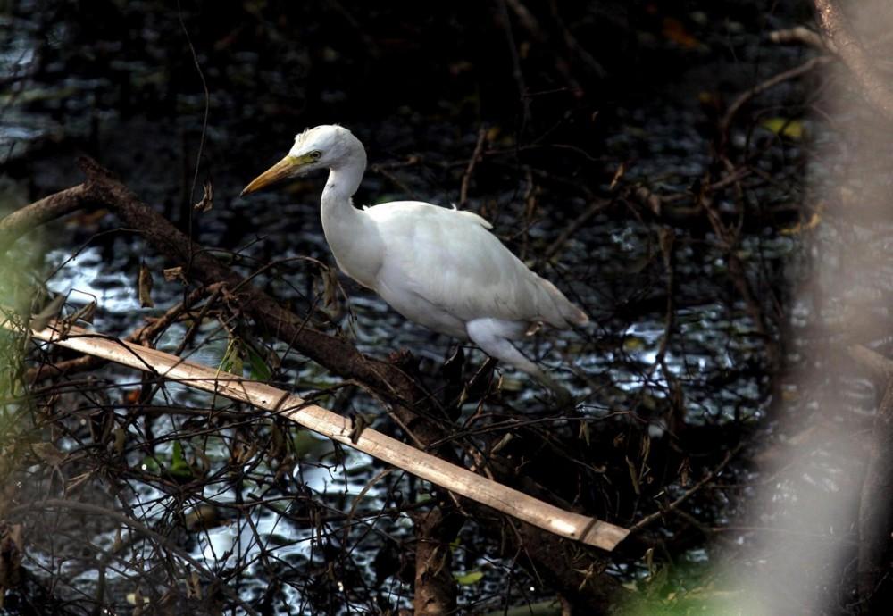 Kampung Ini adalah Tempat Seru Melihat Burung Air