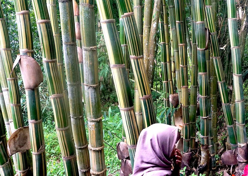 Taman Bambu, Penyelamat Mata Air Sekaligus Tempat Wisata Edukasi