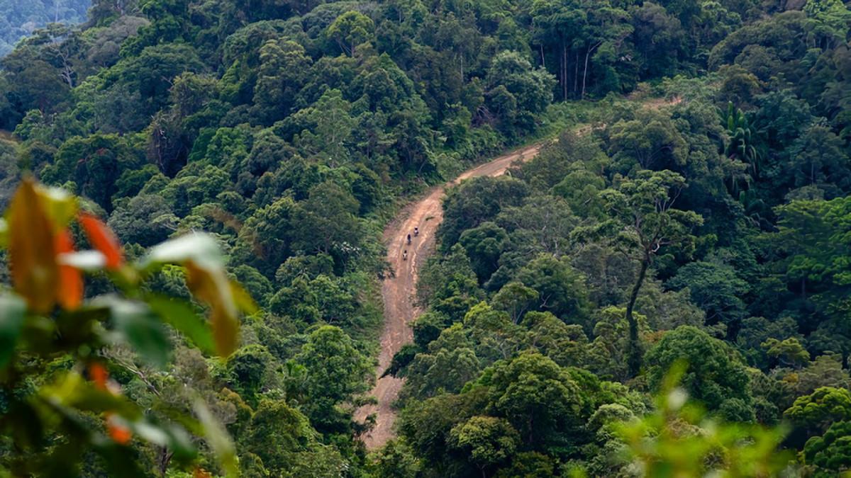 Telusuri Hutan Perawan Kalimantan, Tim Serigala Rider Bawa Pesan untuk Pemerintah