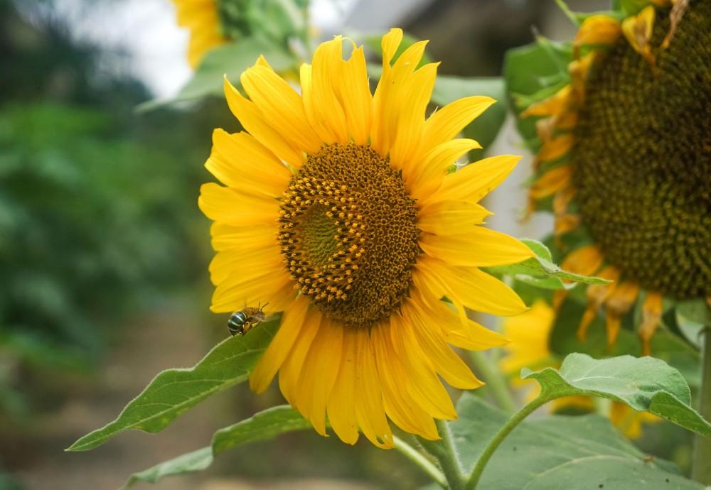 Gambar Bunga Yang Estetik Gambar Bunga
