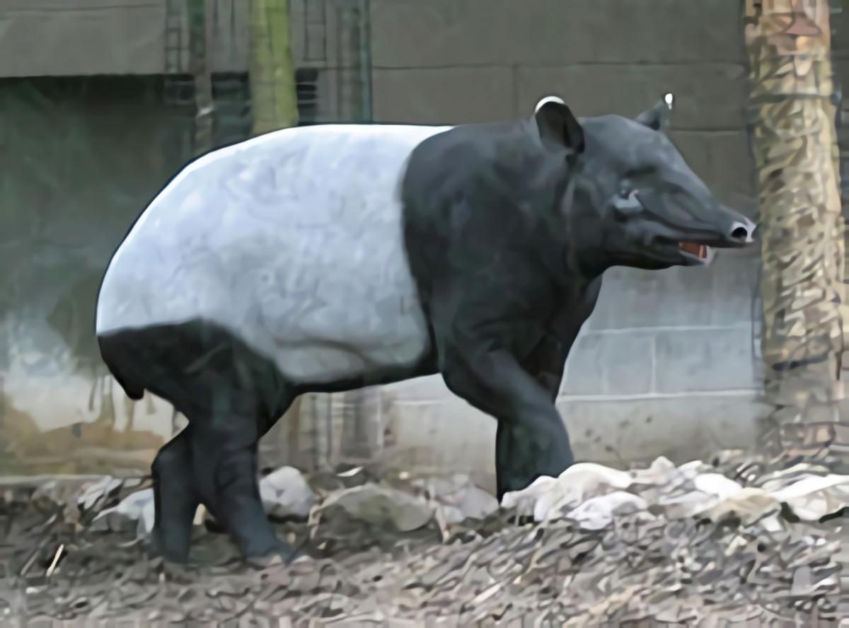 Tapir Asia, Hewan Pemalu Asal Sumatra yang Terancam Punah