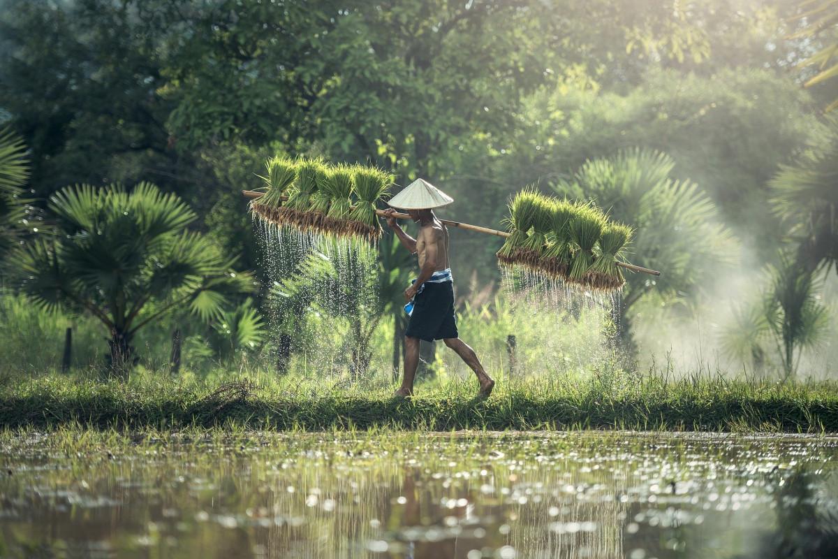 Mitologi Dewi Sri dan Tradisi Pertanian di Nusantara