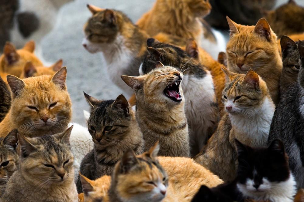Selain di Jepang, Indonesia Juga Punya Pulau yang Penduduknya Kucing
