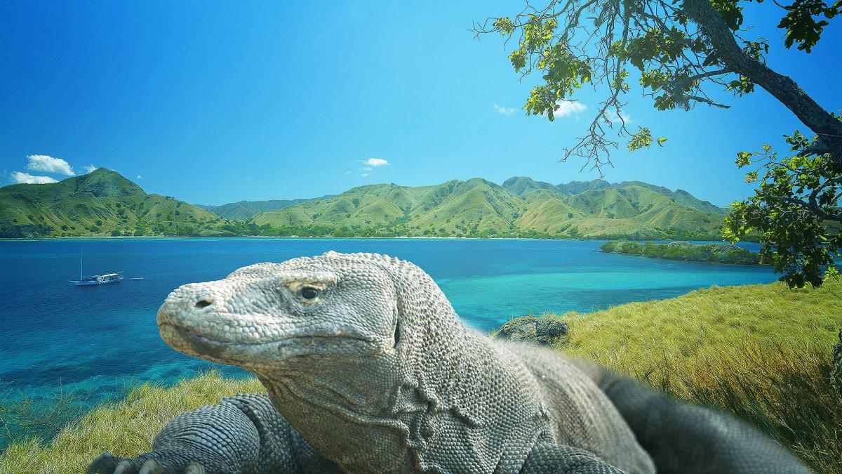 Mitos Pulau Komodo, Pulau Eksotis Nan Memikat