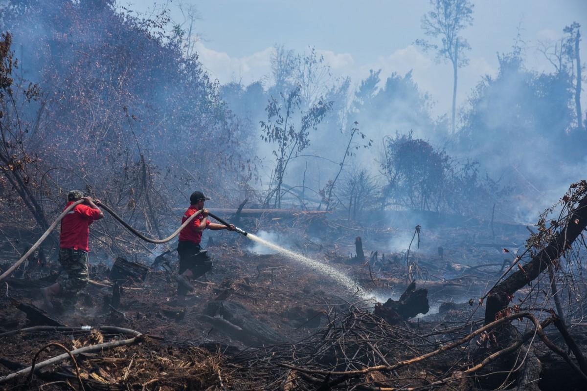 (Menuju COP25), Industri Minyak Kelapa Sawit : Sumber Energi Terbarukan dan Boomerang Hutan Indonesia