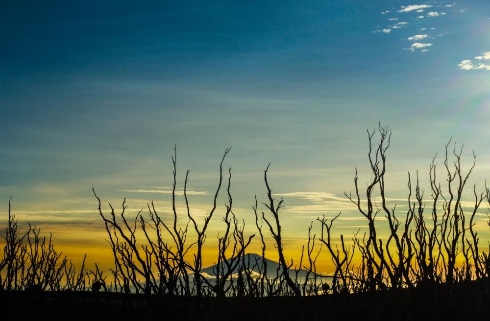 Eksotisme Hutan Mati Papandayan