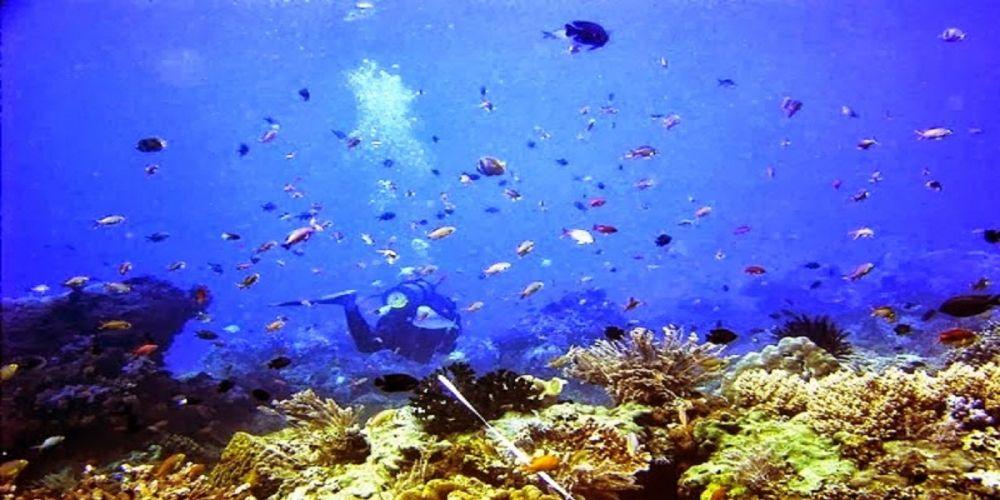 Bangsring, Desa Wisata Pinggir Pantai yang Dikelola Warga