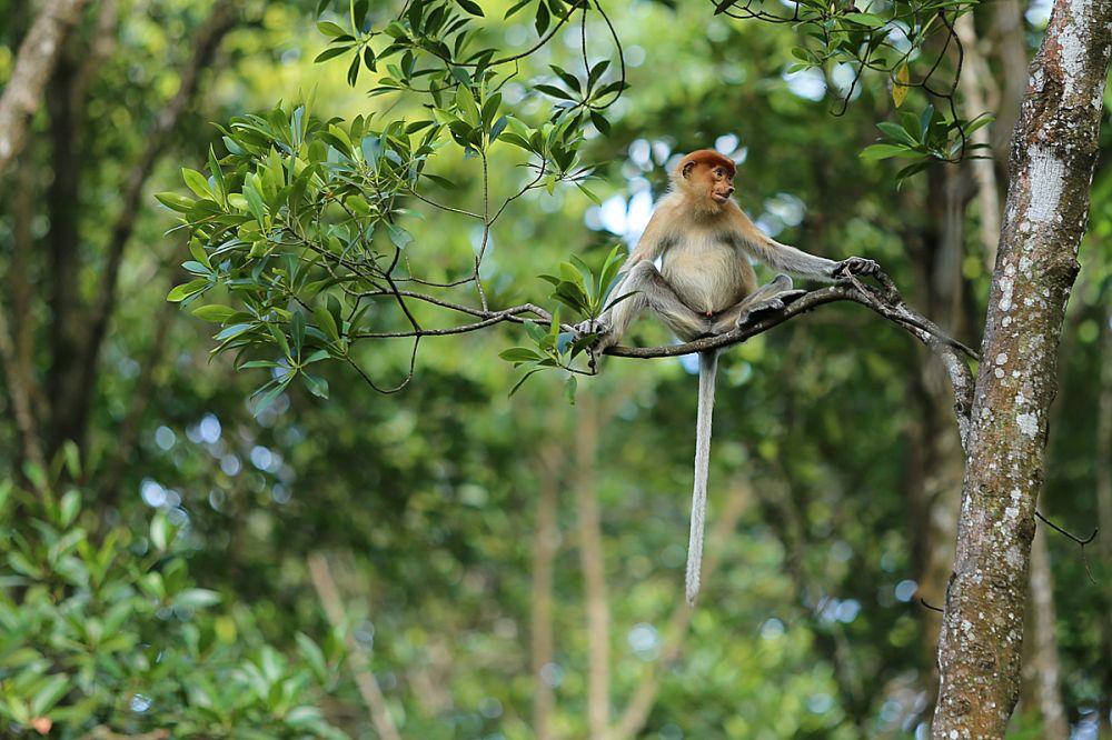 Kupas Tuntas Biodiversitas Indonesia