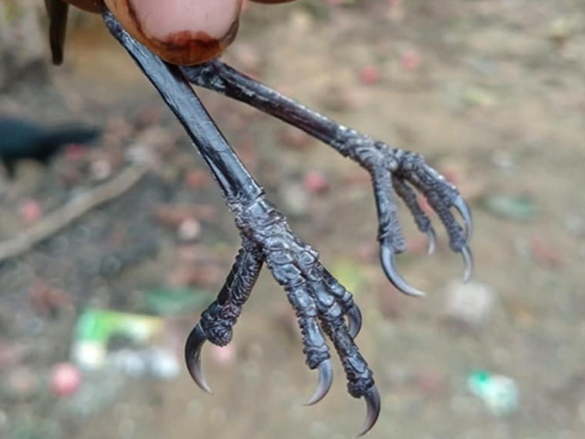 Penemuan Bersejarah: Hilang 172 Tahun, Burung ini Ditemukan Kembali di Kalimantan