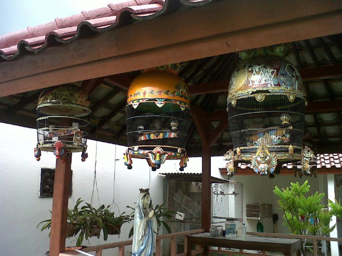 Burung Perkutut dan Ketenangan Batin Orang Jawa