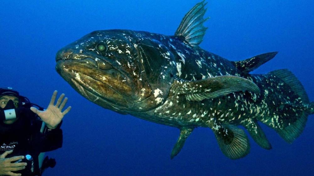 Ikan Purba Ditemukan di Raja Ampat
