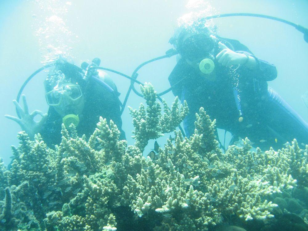 Diving, Salurkan Hobi Dan Selamatkan Terumbu Karang