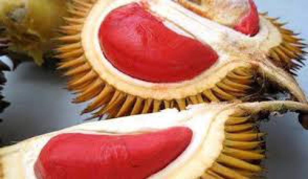 Durian Merah makin Diminati