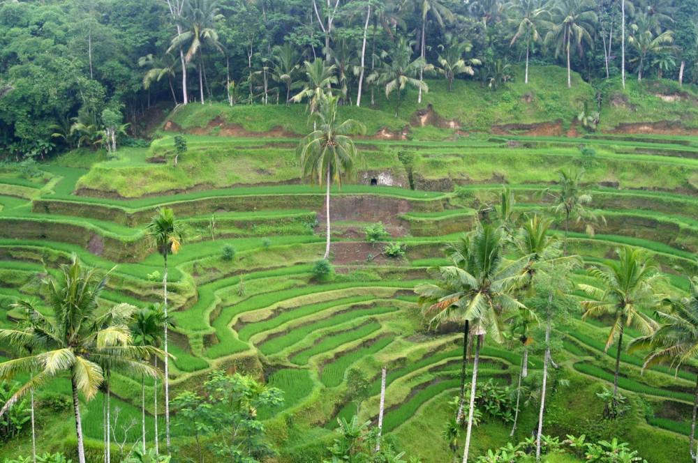 5 Bukit yang Instagrammable di Bali