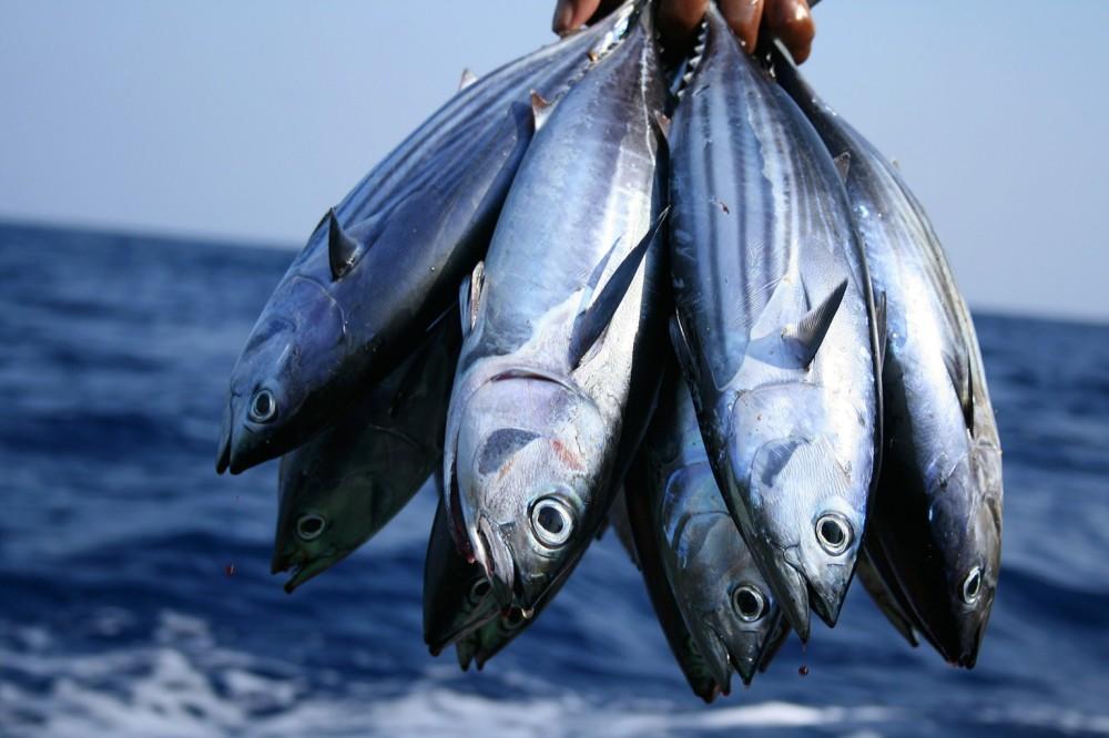 Inilah Beberapa Fakta tentang Laut Indonesia