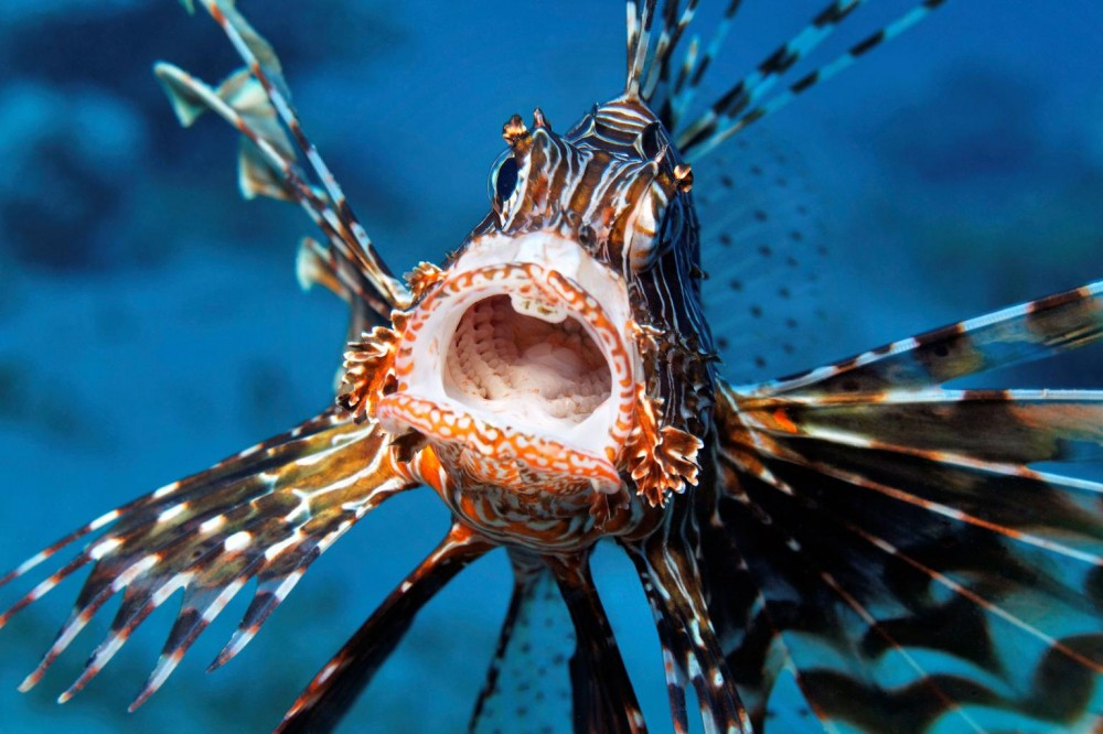 Racun Ikan Ini Bisa Obati Kanker Serviks, Mahasiswa UI Temukan Rahasianya
