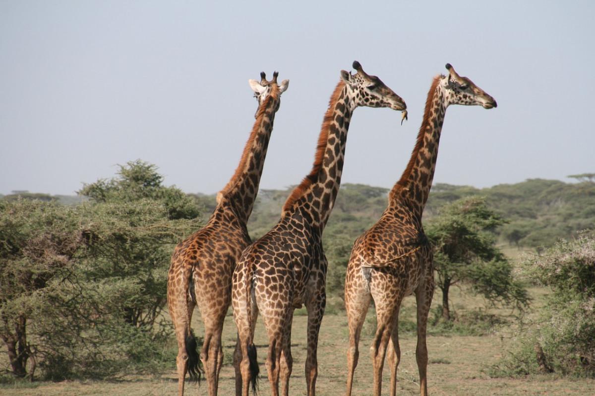 PPKM Terus Diperpanjang, Satwa di Kebun Binatang Terancam Kelaparan