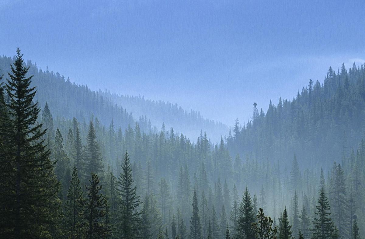 10 Negara Pemilik Hutan Terluas di Dunia, Bagaimana Posisi Indonesia?