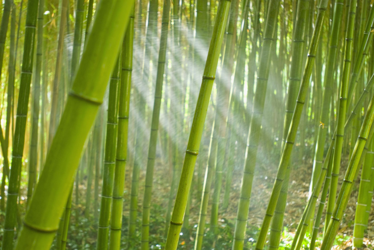 Teknologi Bambu Laminasi, Bahan Alternatif Pengganti Kayu