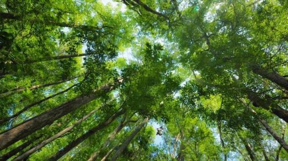 Masyarakat Aceh Gencarkan Perlindungan untuk Hutan Lindung