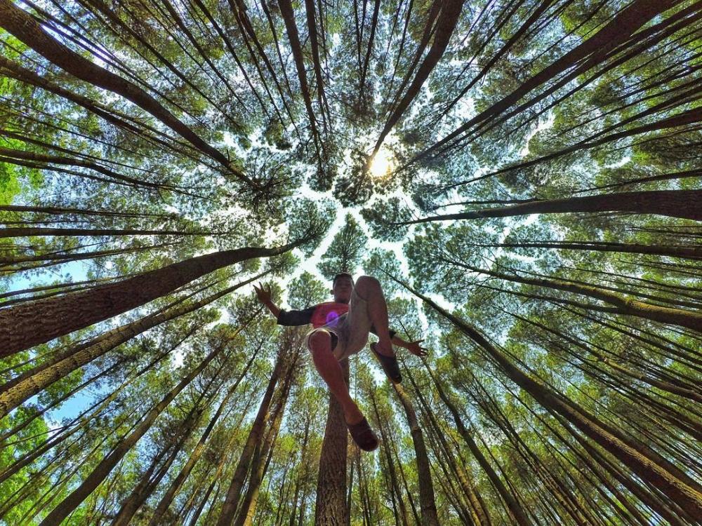 Hutan Pinus Mangunan yang Hebohkan Situs