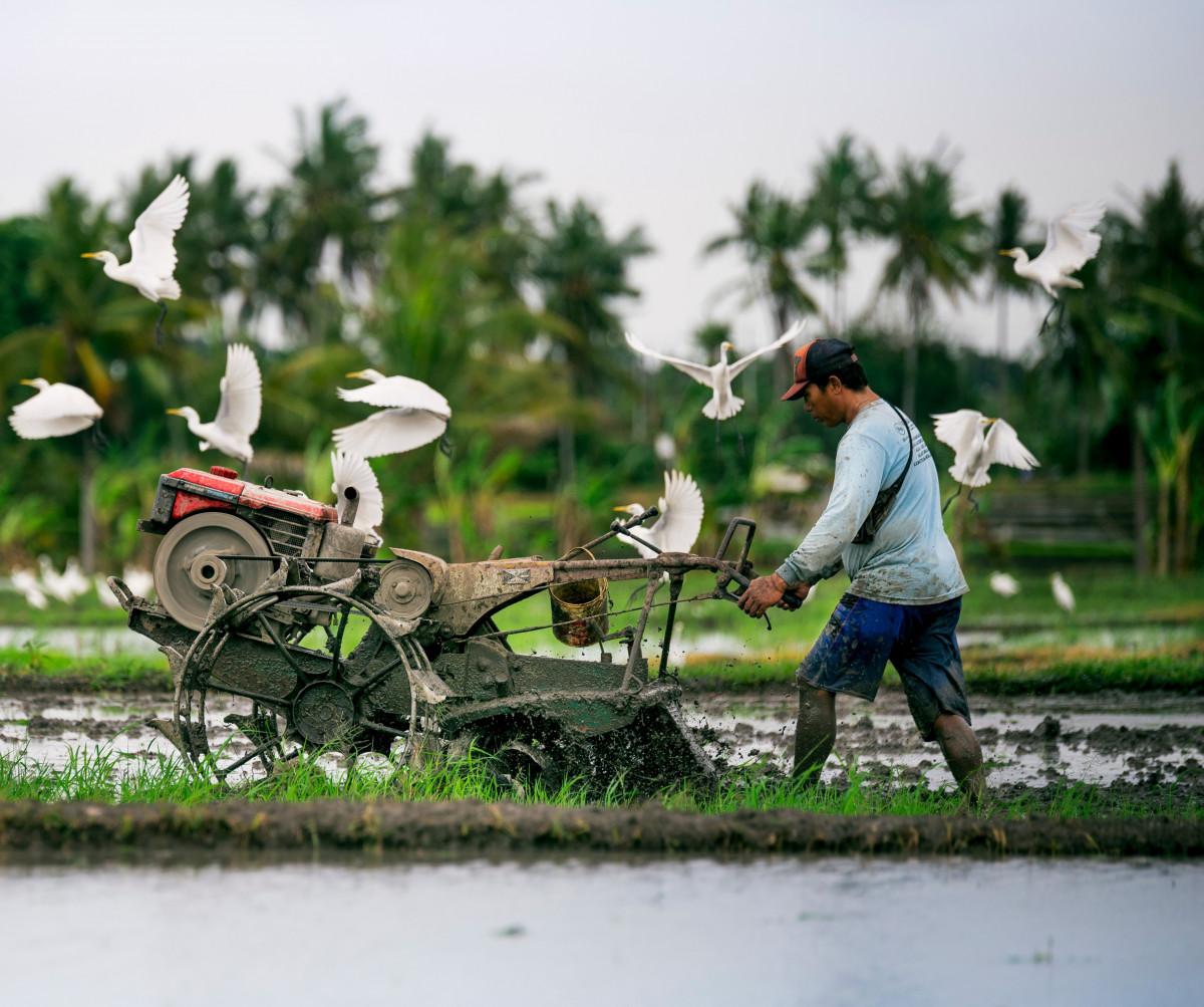Petani Indonesia Bertambah 8 Juta Orang Selama Pandemi