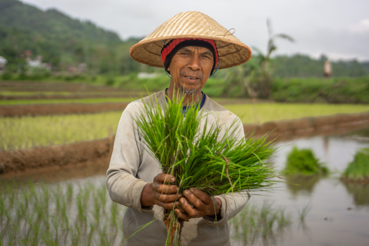 Memahami Makna Hari Krida Pertanian yang Jatuh Setiap Tanggal 21 Juni