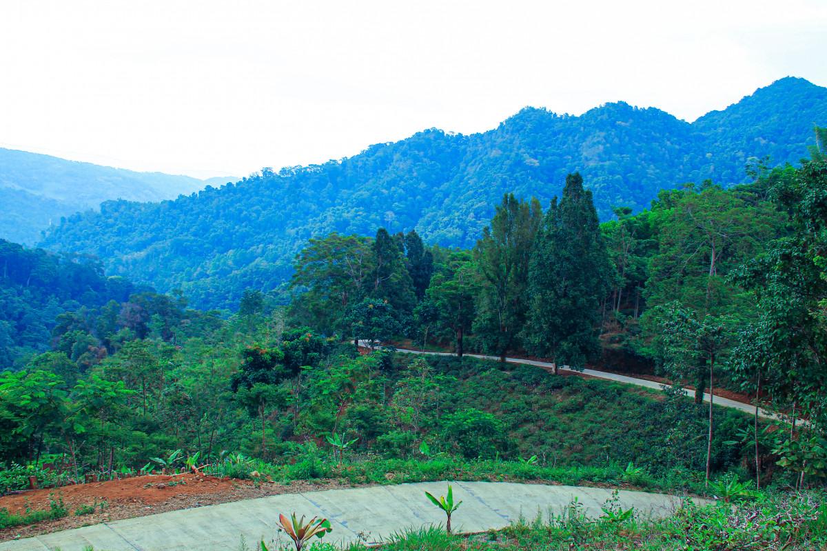 Cara Masyarakat Desa Citengah Memaknai Sumber Kehidupan Melalui Awi