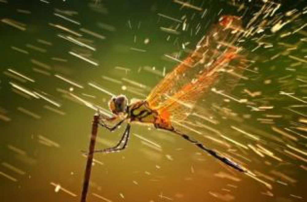 Indonesian Snaps Up Top National Geographic Photography Award