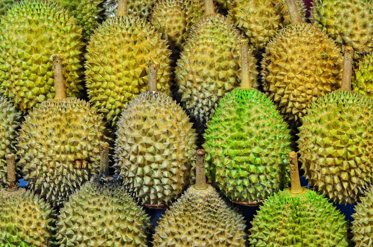 Provinsi Manakah Penghasil Durian Terbesar Di Indonesia?