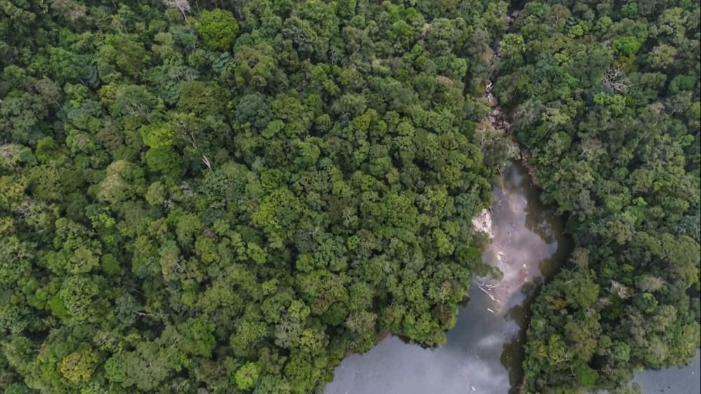 Disinilah Populasi Orangutan Tapanuli Banyak Ditemukan
