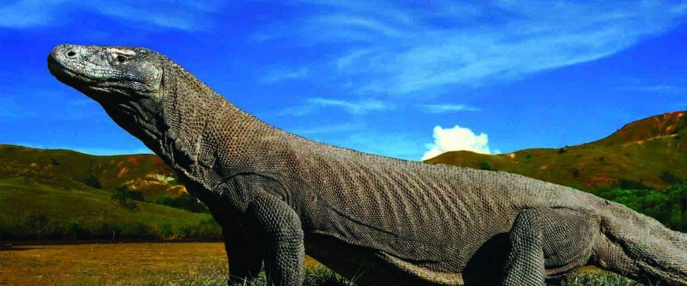 Terbaik! Taman Nasional Komodo Jadi World Top 10 Best Destinations Versi NatGeo