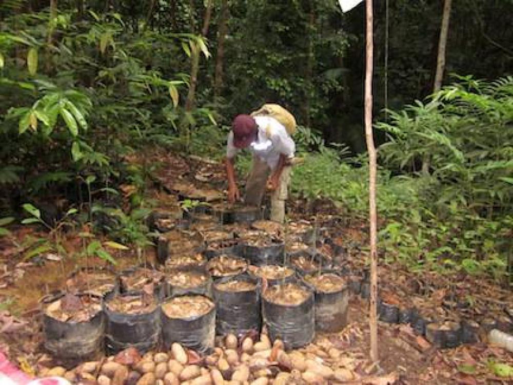 Komunitas Adat di Kalimantan Timur Raih Penghargaan PBB