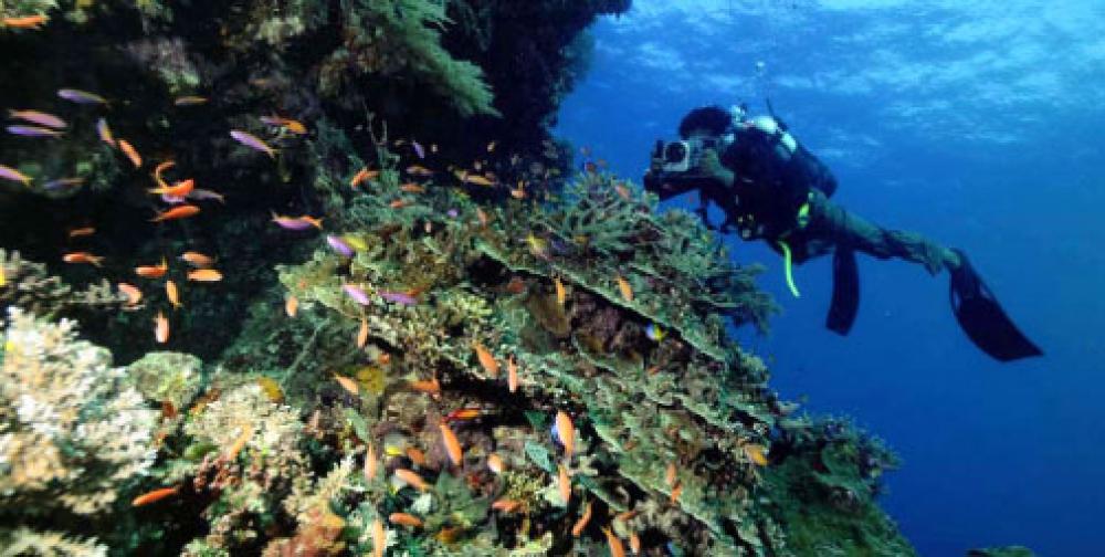 Largest Sea Fish Producers