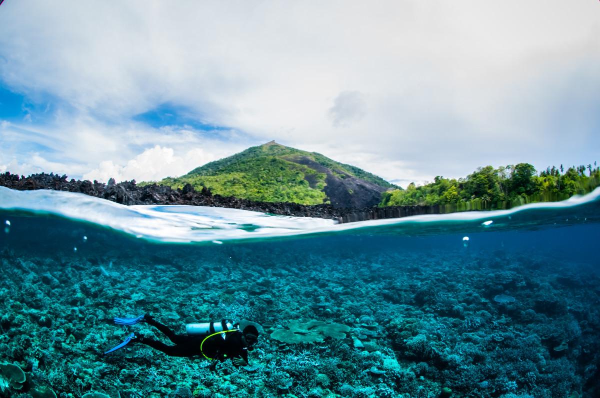 Hari Laut Sedunia, Ini Deretan Hewan Laut Unik yang Ada di Indonesia