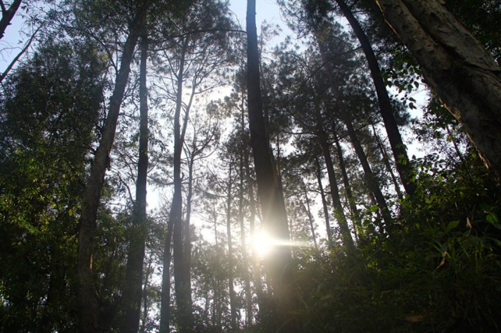Kisah Desa Terong, Desa Peduli Perubahan Iklim dari Selatan Bumi Mataram