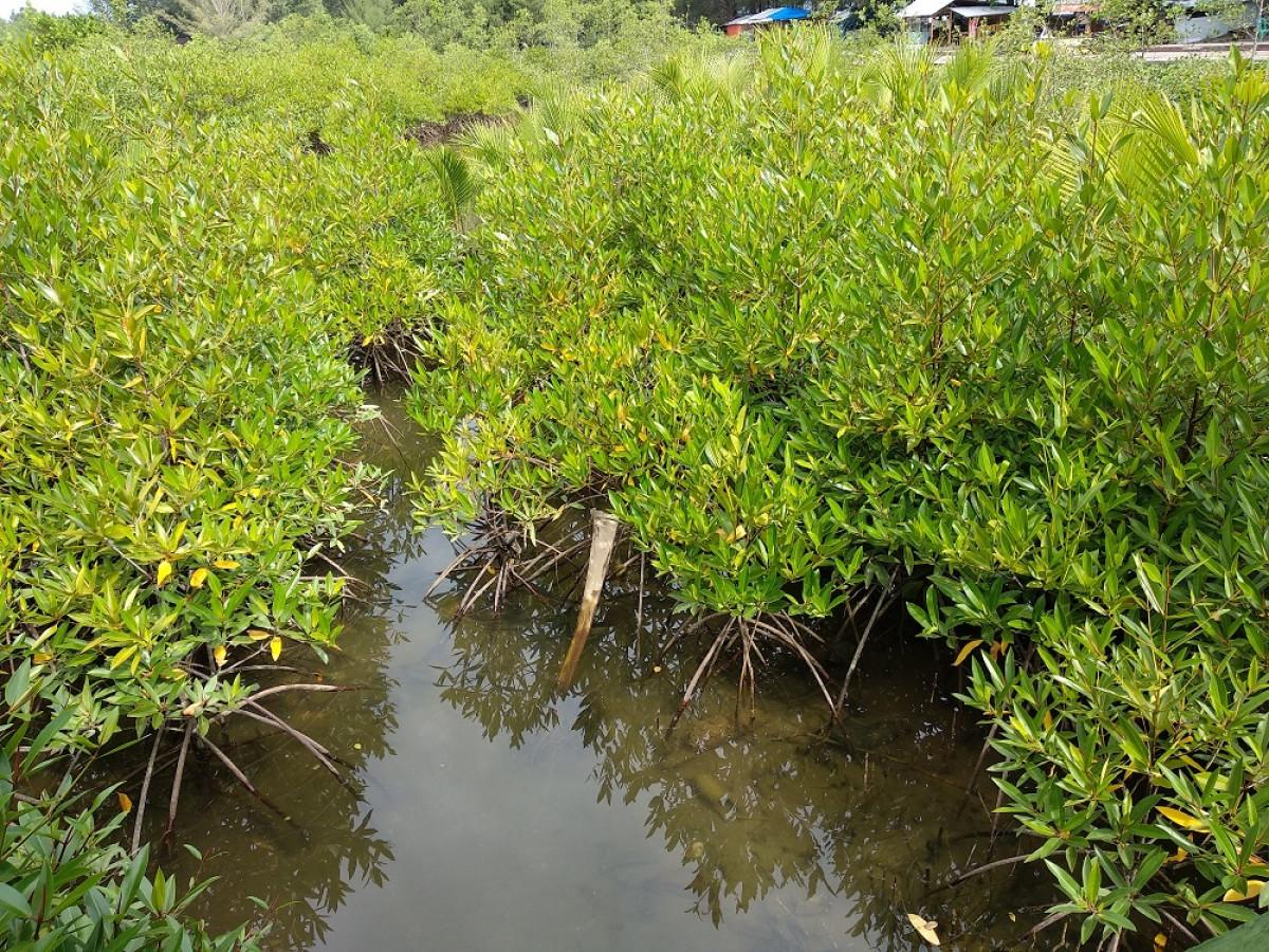 Desa Apar Kota Pariaman, Berwawasan Lingkungan dan Edukasi Ekosistem Pesisir