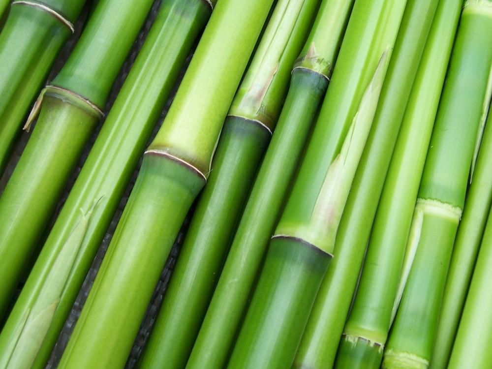 Mbah Subkhi, sosok dibalik bambu runcing
