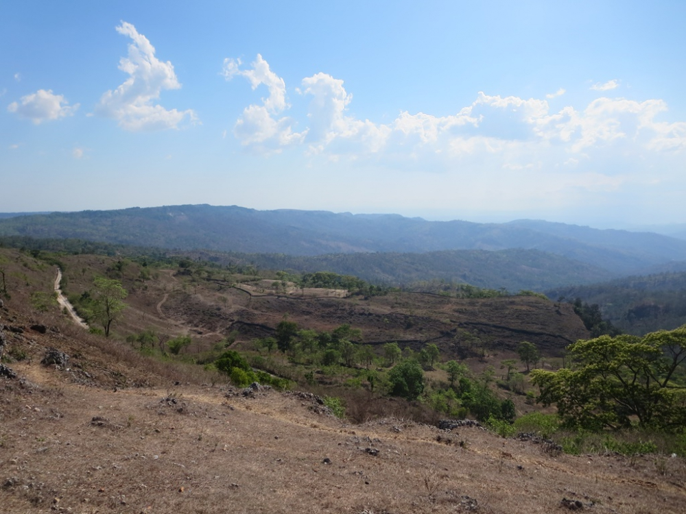 Menapaki Hutan Bonsai di Fatumnasi