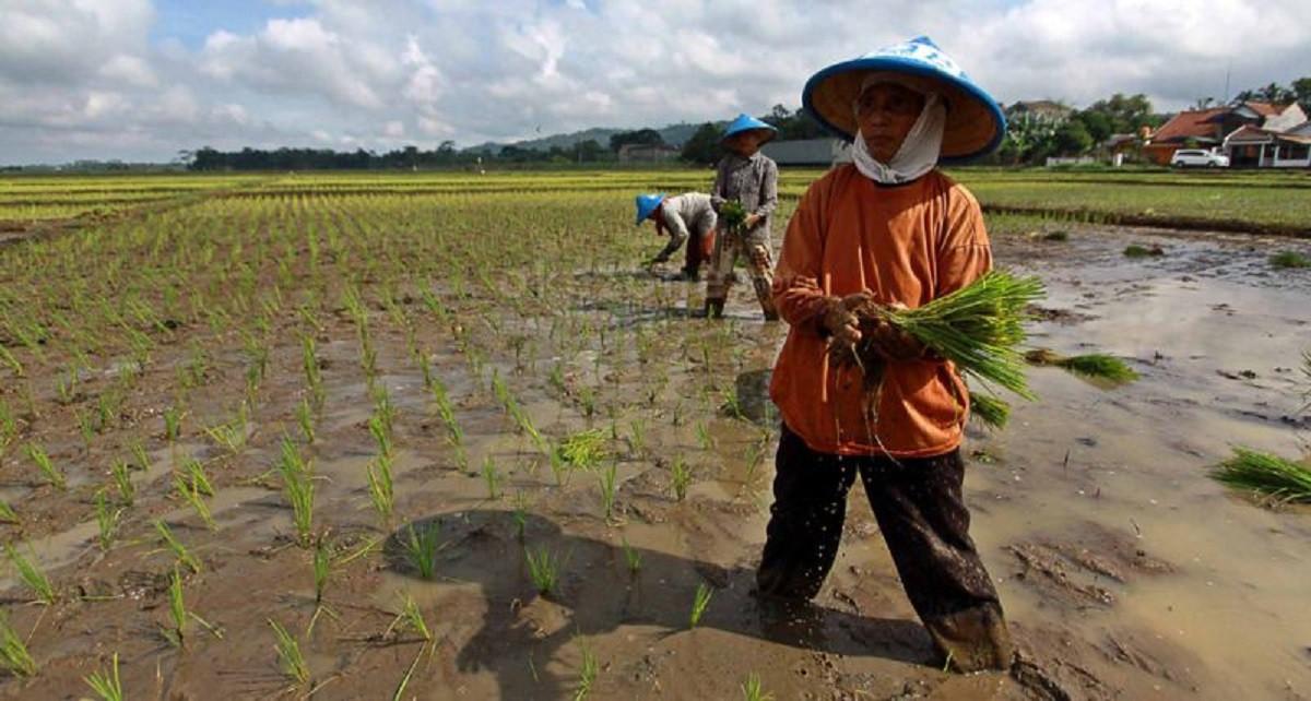 Meski Pandemi, Kinerja Pertanian Indonesia Moncer!