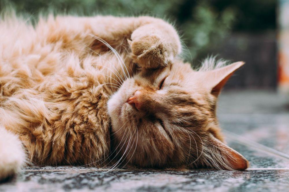 Mitos Menabrak Kucing Bakal Kena Sial yang Masih Dipercaya Masyarakat Indonesia