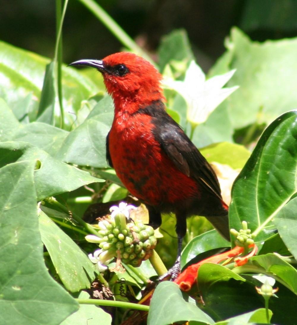 Wow LIPI menemukan Spesies Baru di Pulau Rote