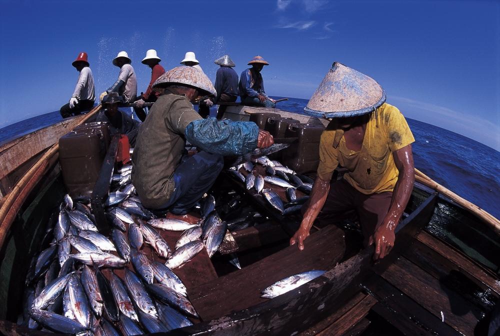 FishLog, Aplikasi yang Membantu Nelayan Mendunia