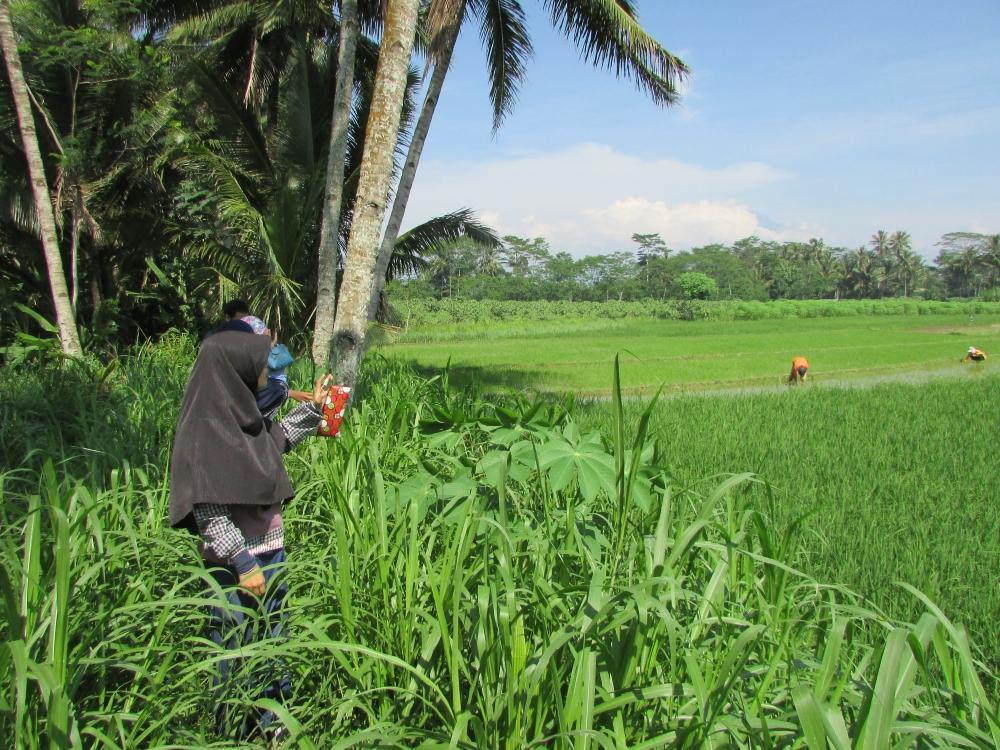 """Mahasiswa IPB Melakukan Inovasi """"Blusukan Pangan"""" di Desa"""