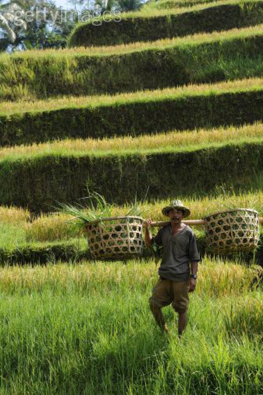 Part II: Malaysia, Brazil, dan Masa Depan Indonesia