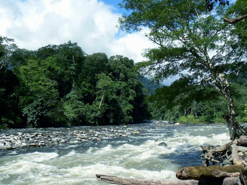 Penghuni Cantik Taman Nasional Gunung Leuser