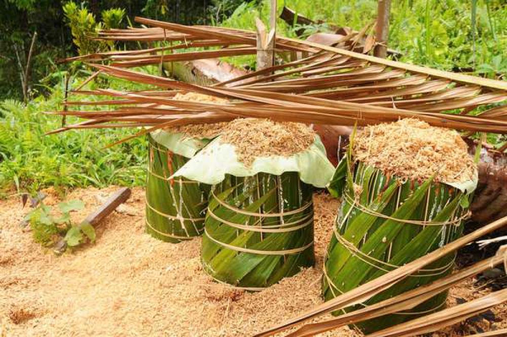Pemerintah Indonesia Resmikan Pabrik Sagu Terbesar di Papua