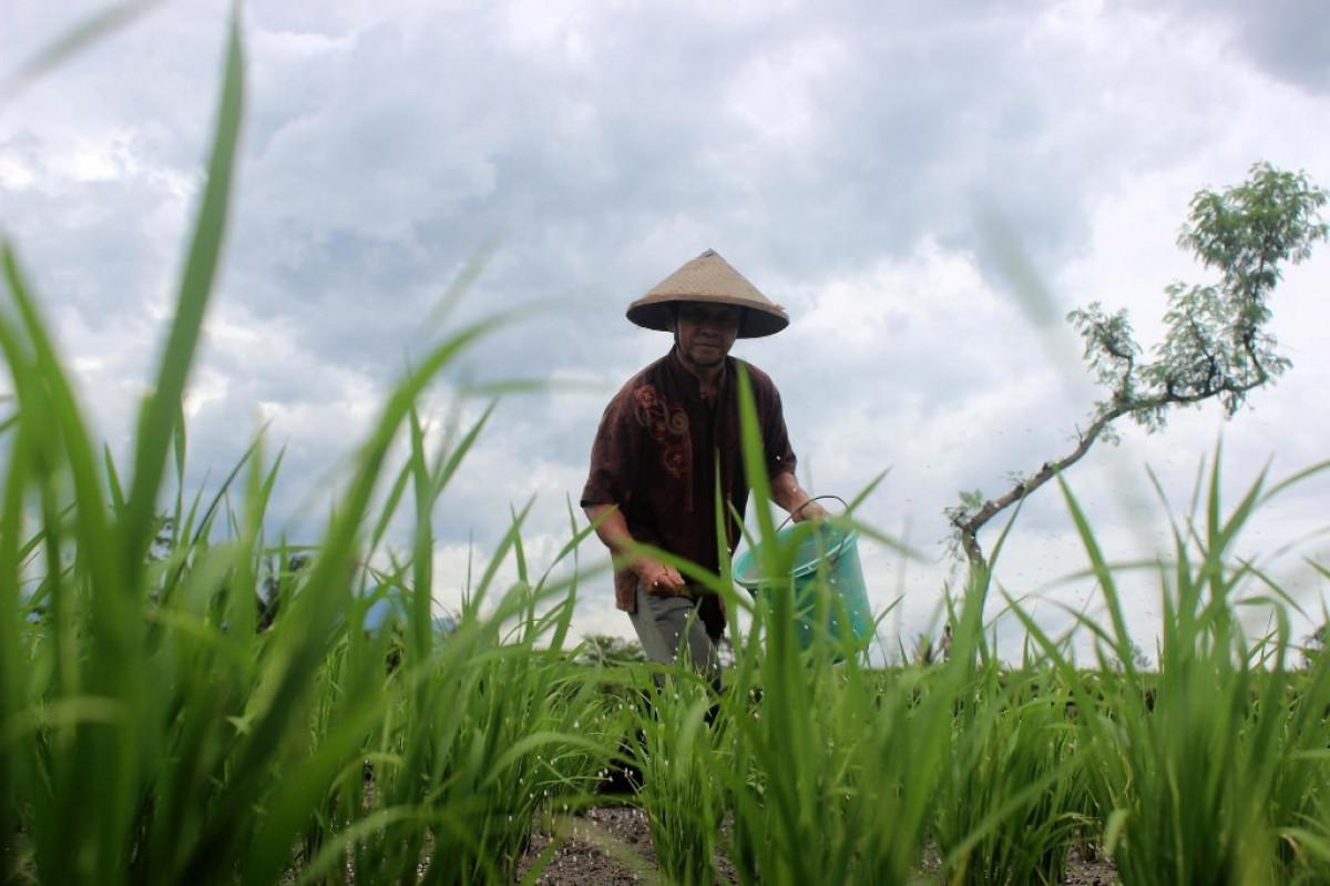 Menyelisik Uniknya Ritual Pertanian di 3 Daerah Indonesia