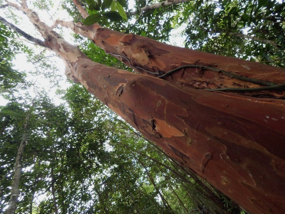 Hutan Pelawan, Surga Di Tengah Bangka